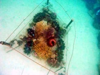 Coral Sanctuary